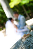Bride and groom. Soft focus bride and groom Stock Photography