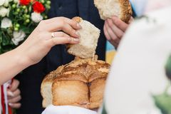The bride and groom break the wedding loaf. royalty free stock photos