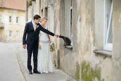 Bride, groom and a cat Royalty Free Stock Images