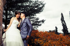 Bride and groom couple wedding love Royalty Free Stock Images