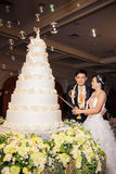 Bride and groom are cutting cake Stock Image