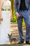 Bride Groom Dog Stock Image