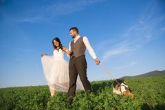 Bride and groom with dog Royalty Free Stock Photography