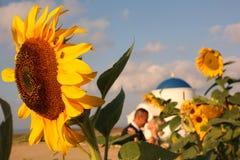 Bride and groom embracing near sunflowers Stock Photos