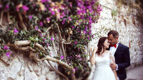 Bride and groom embracing near wall full of flowers Stock Images