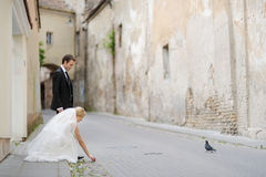 Bride and groom feeding a pigeon Stock Photography