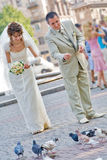 Bride and groom feeding pigeons Royalty Free Stock Image