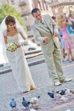 Bride and groom feeding pigeons Royalty Free Stock Image