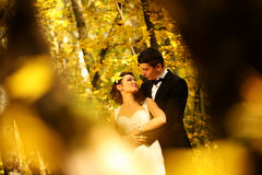 Bride and groom in a forest Royalty Free Stock Images