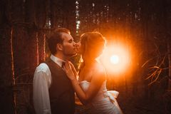 Bride and groom in the forest of firs.  stock images