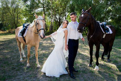 Bride and groom in forest with horses. Wedding couple  .Beautiful    portrait in nature Royalty Free Stock Photos