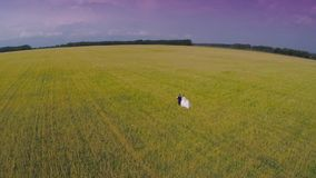 Bride and groom going through the green wheat field aerial view. top view stock video