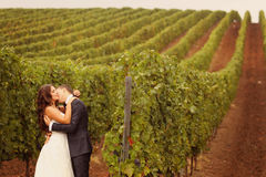 Bride and groom at a green cold rainy day vineyard Royalty Free Stock Image