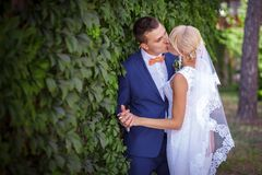 Bride and groom, green grapes Royalty Free Stock Images