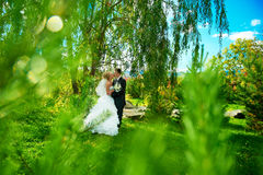 Bride and groom of green park. Bride and groom on the background of green park Royalty Free Stock Images