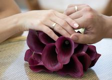 Bride and groom hands. Stock Photo
