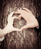 Bride and groom hands. Making a shape of the heart Stock Image