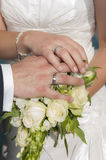 Bride and groom hands showing rings Stock Photography