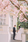 Bride and groom have romantic talking on stairs under blossoming magnolia tree. Vintage building at background Stock Images