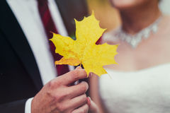Bride and groom holding autumn leaf in hands Stock Images