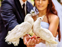Bride and groom holding dove outdoor Stock Image