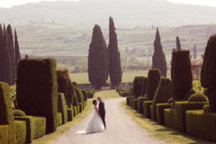 Bride and groom holding hands Royalty Free Stock Photo