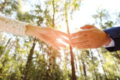 The bride and groom holding hands in the Park or forest.In the hands of a wedding ring. The sun shines. Close up royalty free stock photography