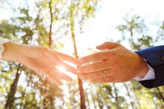 The bride and groom holding hands in the Park or forest.In the hands of a wedding ring. The sun shines. Close up royalty free stock images