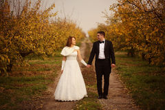 Bride and groom holding hands on a path Stock Photography