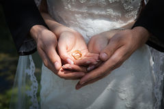 Bride and groom holding hands with the rings on the wedding photo session Royalty Free Stock Photos