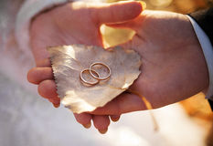 Bride and groom are holding leaf with rings. Bride and groom are holding birch leaf with gold wedding rings Royalty Free Stock Photos