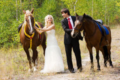 Bride and groom with horses Royalty Free Stock Photos