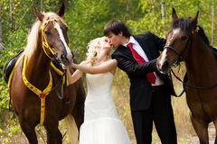 Bride and groom with horses Stock Image