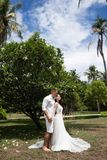 Bride and groom hug around an exotic flowering tree. Wedding on a tropical island stock photography