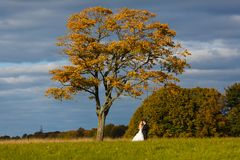 Bride and groom hugging on the field Royalty Free Stock Image