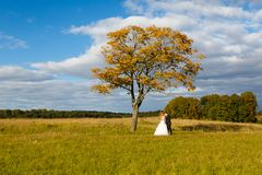 Bride and groom hugging on the field Royalty Free Stock Photo