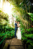 Bride and groom hugging under bamboo at jungle Stock Photos