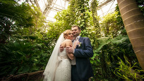Bride and groom hugging under palm at rain forest Stock Image