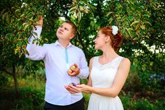 The bride and groom are kissing in the apple orchard, standing u stock image