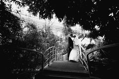 Bride and groom kissing on bridge under big tree Stock Images