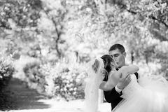 Bride and groom kissing in the park Royalty Free Stock Photography