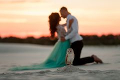 Bride and groom kneel and look at each other next to owl in desert. Stock Photography