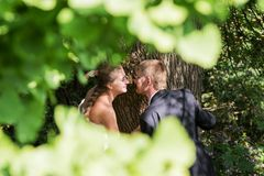Bride and groom near the tree Royalty Free Stock Images