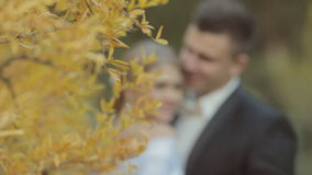 Bride and groom near the tree with yellow leaves. Focus on leaves stock video footage