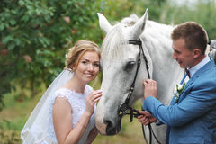 Bride and groom next to a beautiful thoroughbred horse on the lawn. Royalty Free Stock Photos