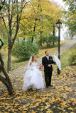Bride and groom in park Royalty Free Stock Photo