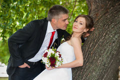 Bride and groom. The bride and groom in the park near the tree Stock Photo