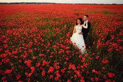 The bride and groom in a poppy field Stock Photo