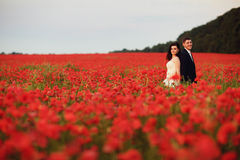 The bride and groom in a poppy field Stock Image