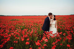 The bride and groom in a poppy field Royalty Free Stock Photography